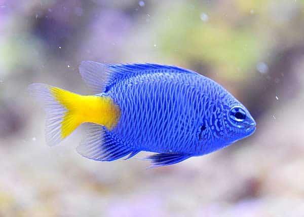 Viel Spaß beim Aquarium kaufen und einrichten!
