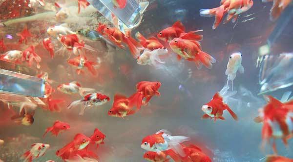 Tipps zum Aquarium kaufen und einrichten?