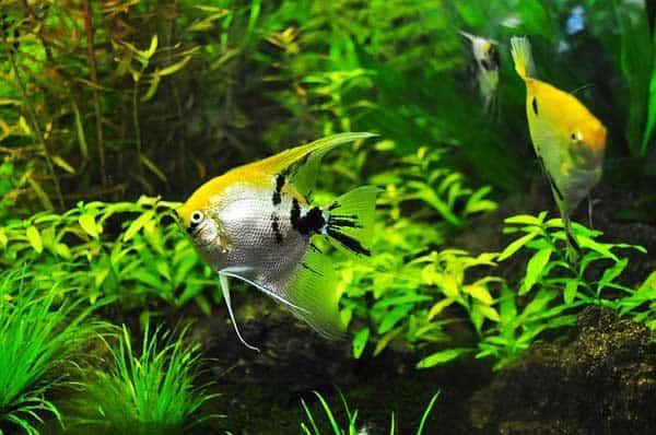 Starten wir mit unserem Aquarium Guide