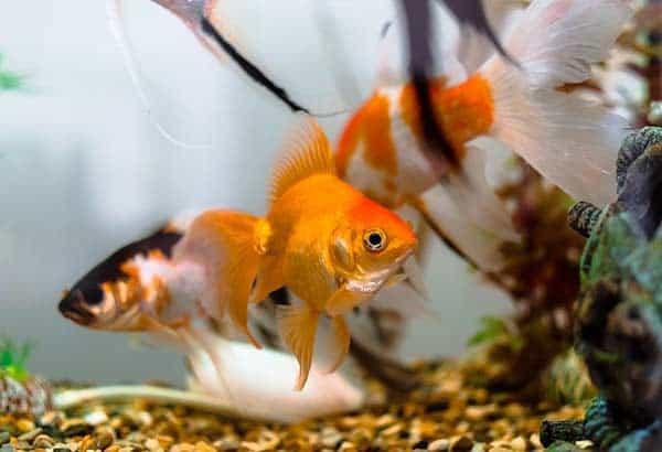 Nur mit der richtigen Pflege hast Du mit einem Aquarium Kauf lange Freude