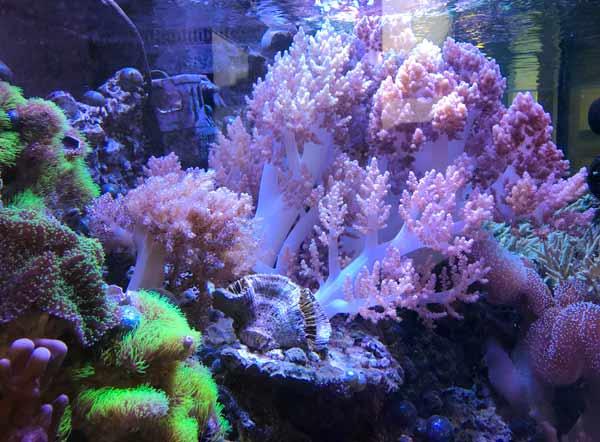 Aquarium einrichten - es gibt viele Möglichkeiten