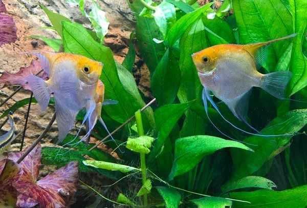 Aquarium einrichten - hier gilt es einiges zu beachten