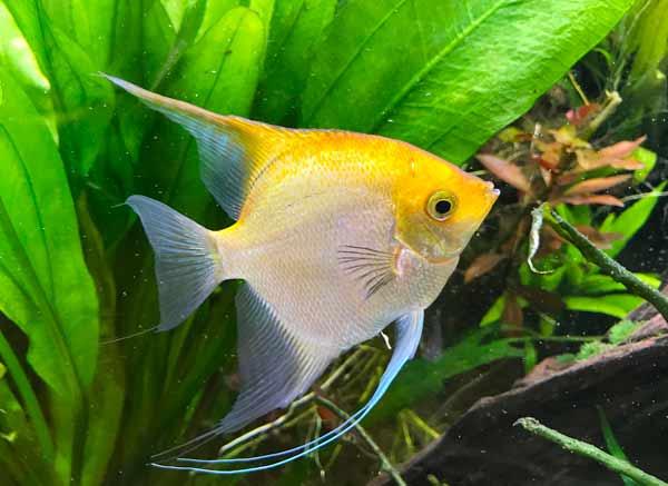 Welche Fische möchtest Du in Deinem Aquarium?