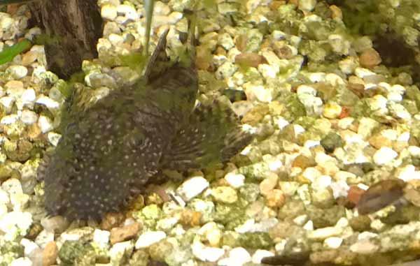Bodengrund - für die Fische die richtigen Materialien auswählen